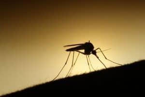 اكتشاف لقاح جديد ومحدود للملاريا.. ماذا تعرف عنه؟