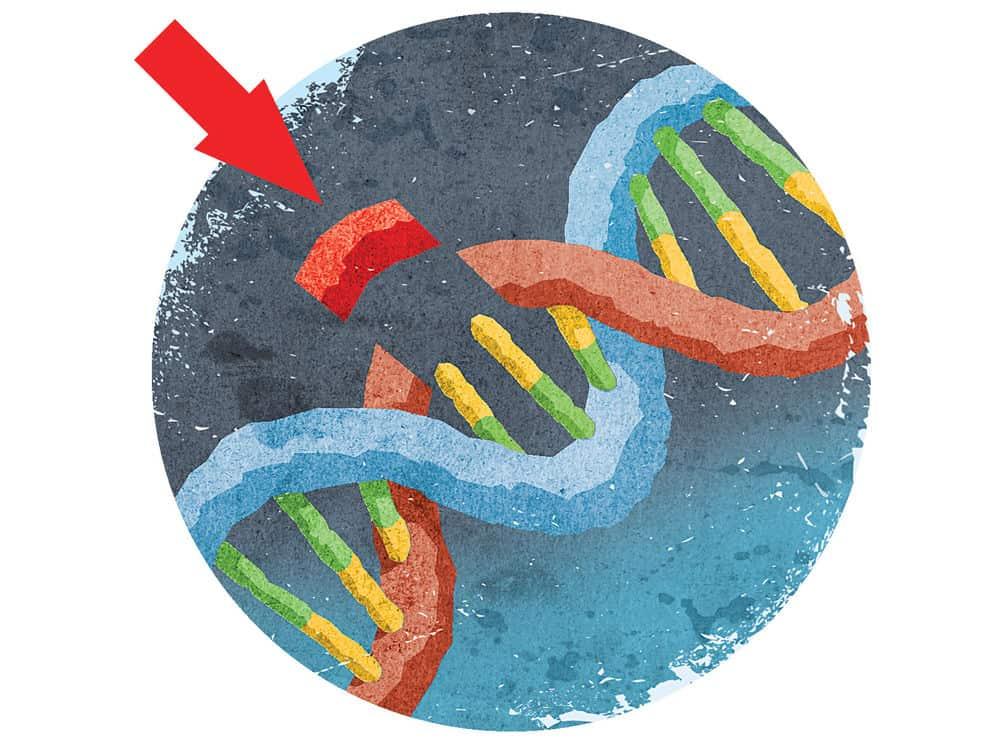 تعمل تقنية كريسبر كمقصات لقطع الحمض النووي الريبي منقوص الأكسجين (DNA)