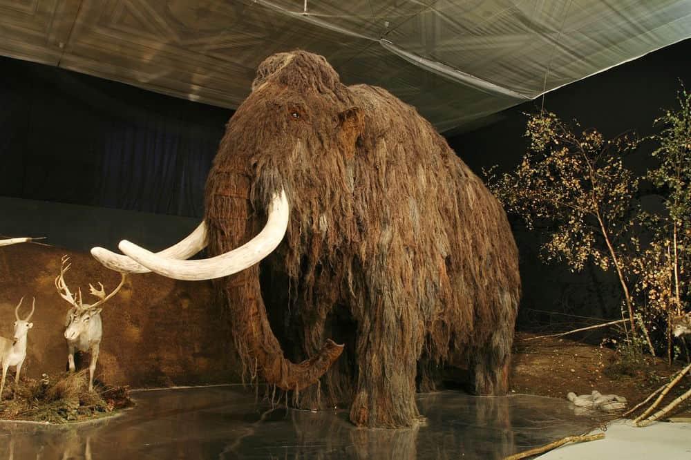 انقرض من 4 آلاف عام: عاج الماموث يهدد الفيلة بالانقراض