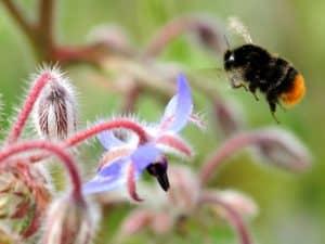 هل يمكن إنقاذ النحل عن طريق زراعة الأزهار البرية؟