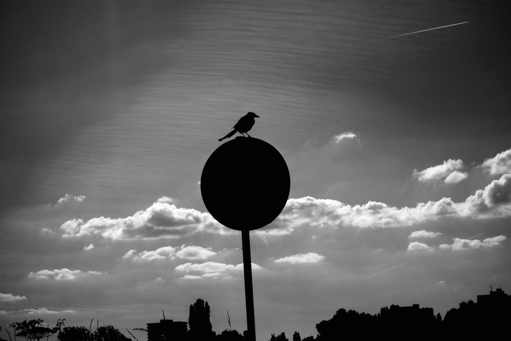 الطيور تغير طريقة غنائها لتقاوم ضوضاء الزحام