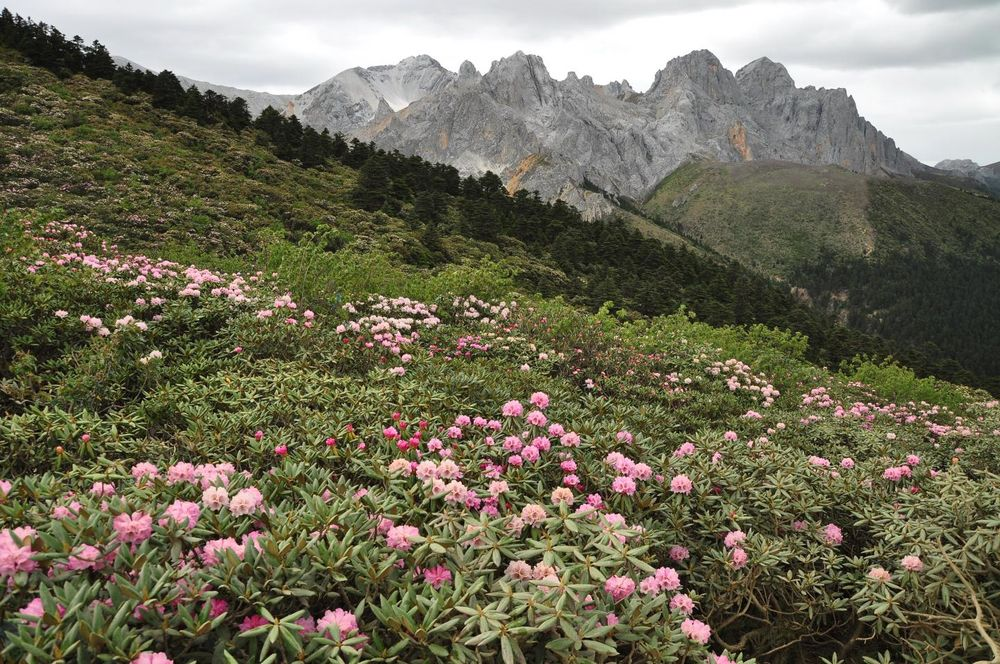 الجبال تؤدي إلى تطور أنواع جديدة أثناء ازدياد ارتفاعها