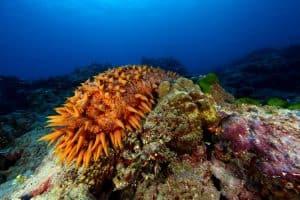 ما القوة الخارقة السرية التي يملكها خيار البحر؟