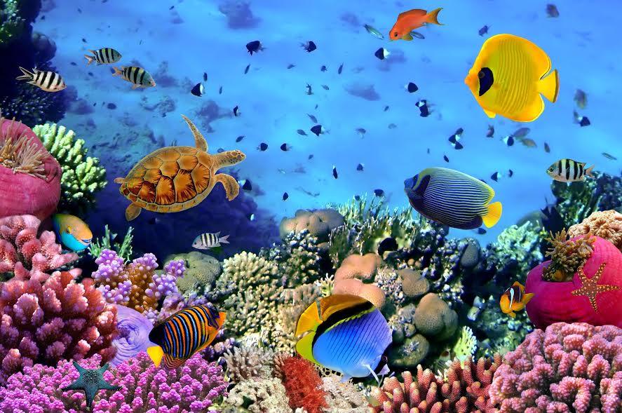باحثون من جامعة الملك عبدالله يدرسون كنوز البحر الأحمر