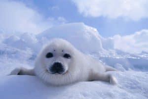 من دون شك، كل نفاياتنا البلاستيكية تنتهي في القطب الشمالي
