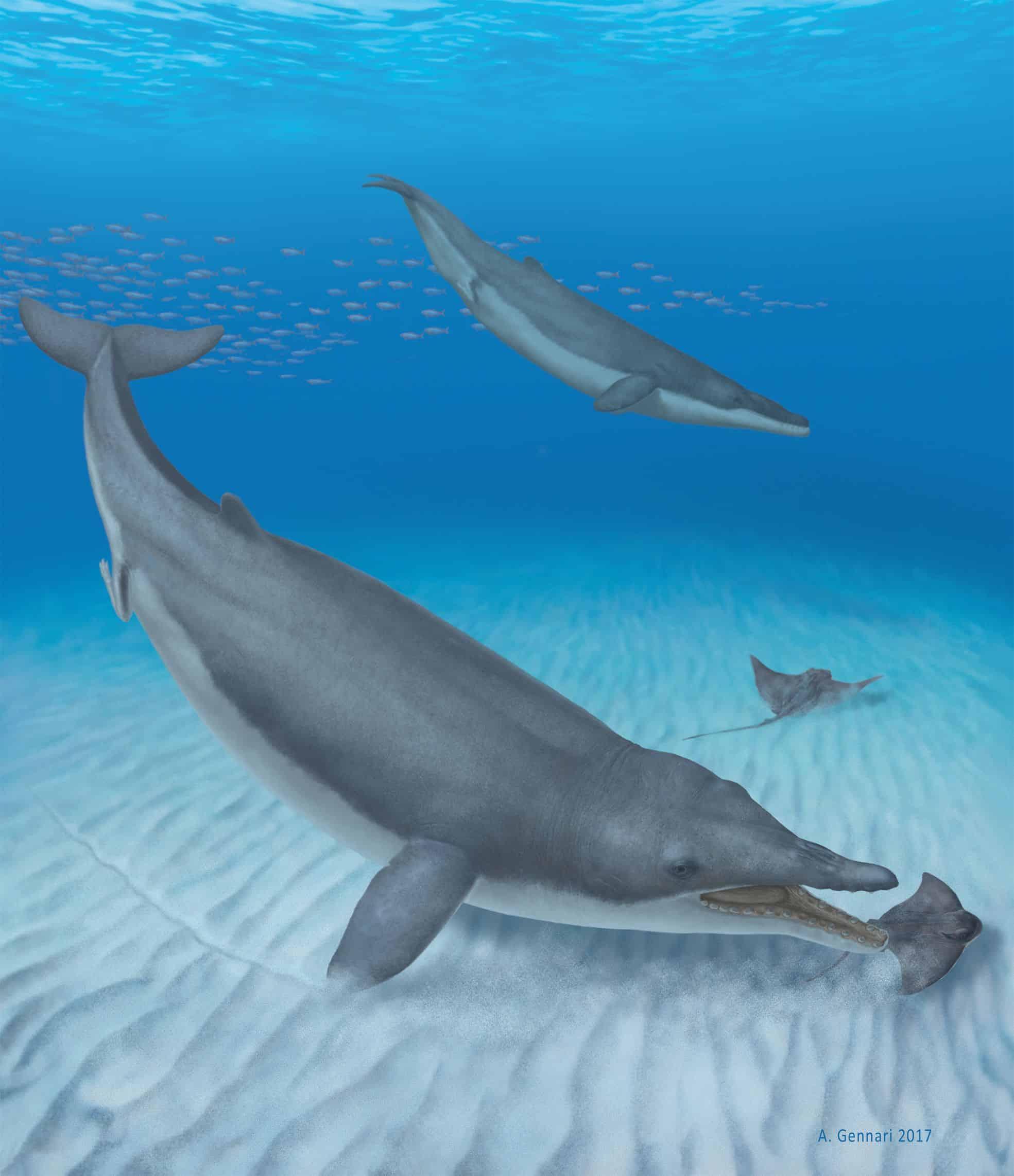 هذا الحوت ذو الأصول الغابرة لديه أسنان، ولكنه كان رغم ذلك يرتشف غذاءه قرب قاع المحيط