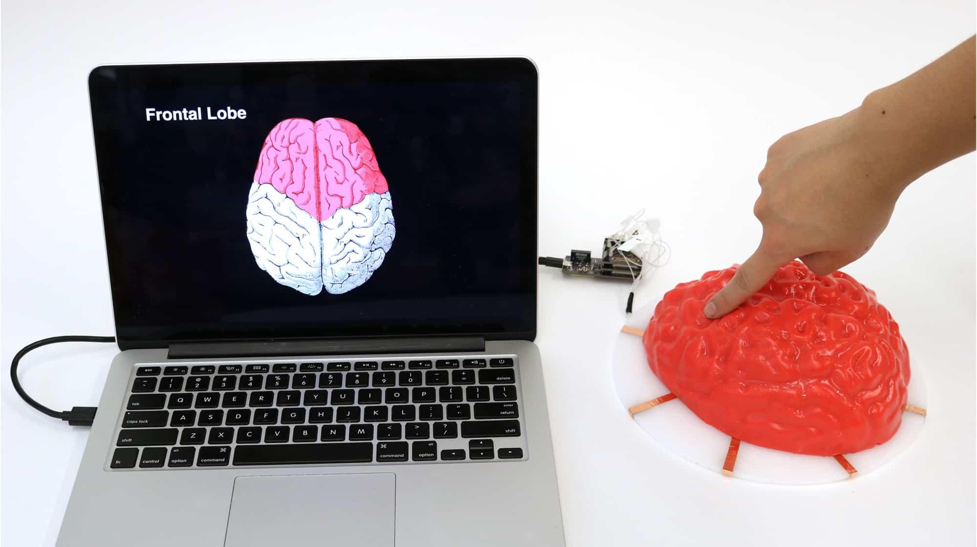 ما الذي يخبرنا به الدماغ الهلامي عن مستقبل التفاعل بين الإنسان والآلة