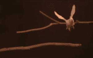 طريقة قفز الببغاوات الصغيرة تفيد في تعليم الروبوتات الطيران