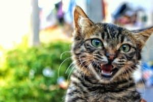 لماذا ينبغي ألا نقلّم مخالب القطط؟ وما هو البديل؟