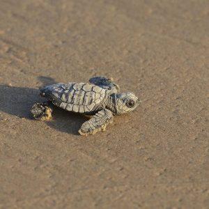 مجموعة من أجمل صور السلاحف في اليوم العالمي للسلاحف