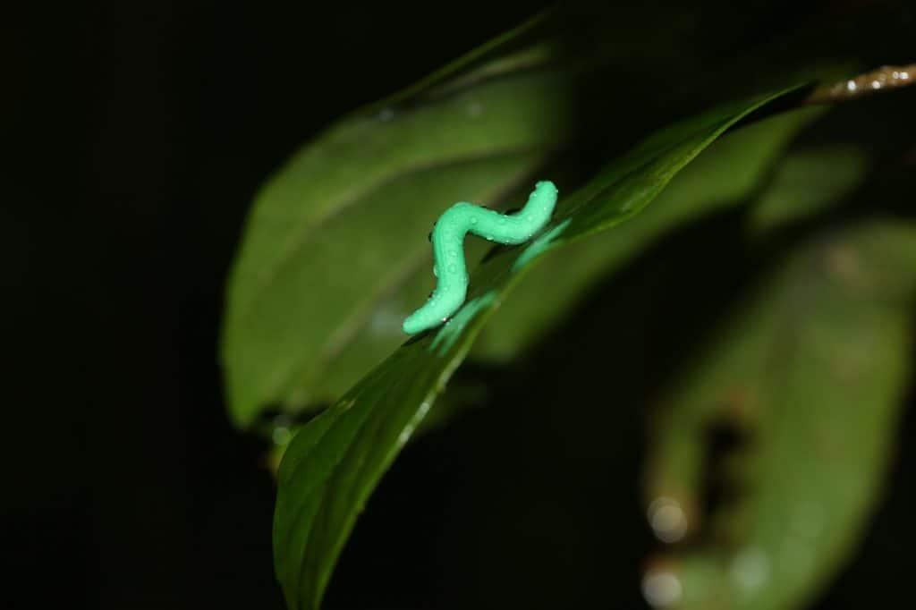 علماء يقومون بصنع 2879 يرقة صغيرة من الصلصال وينشرونها في جميع أنحاء العالم
