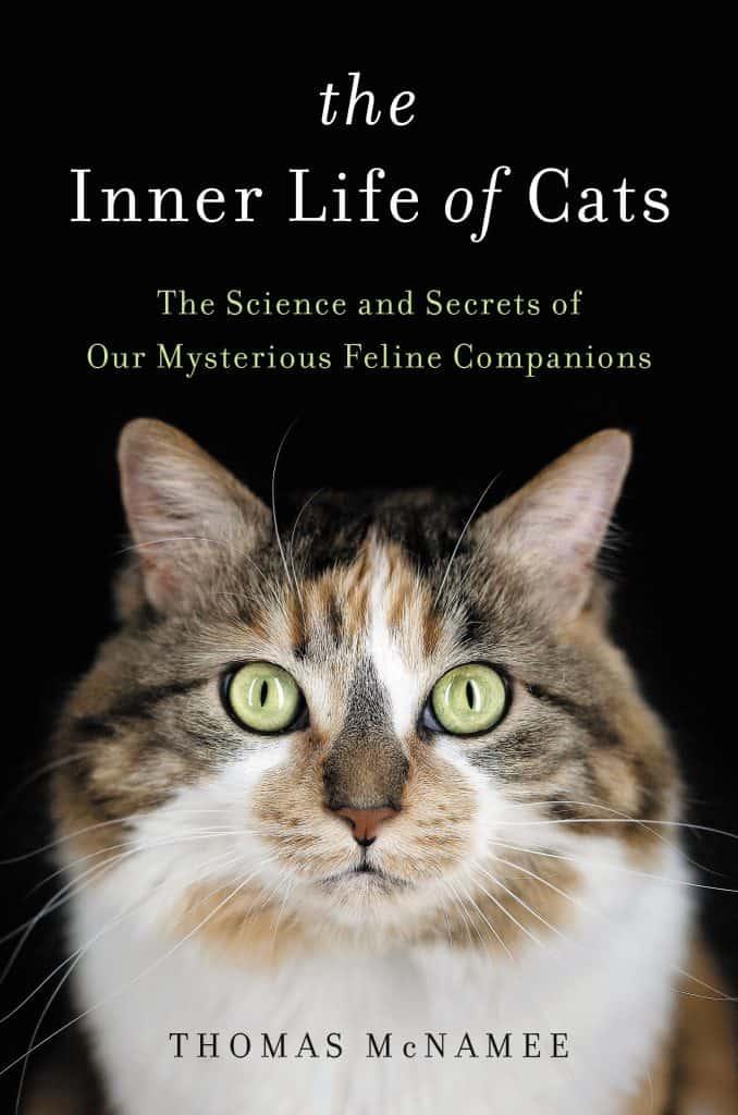 الحياة مع قطة الوشق خدمة للعلم