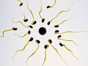 الطب الصيني الشعبي يُقدم لنا مانعاً للحمل يمكن استخدامه من قبل الرجال أو النساء على حد سواء