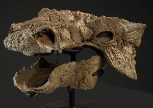 نوع جديد من الديناصورات يشبه مخلوق زوول الخيالي الذي ظهر في الفيلم الشهير