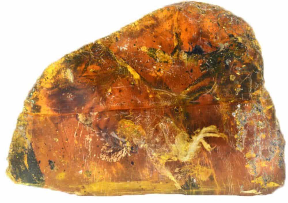 هذا الطائر الصغير الجميل تم حفظه بطريقة مثالية داخل قطعة من الكهرمان لمدة 99 مليون سنة