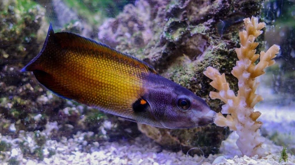 كيف تستطيع هذه الأسماك أكل المرجان ذي الطعم اللاذع؟
