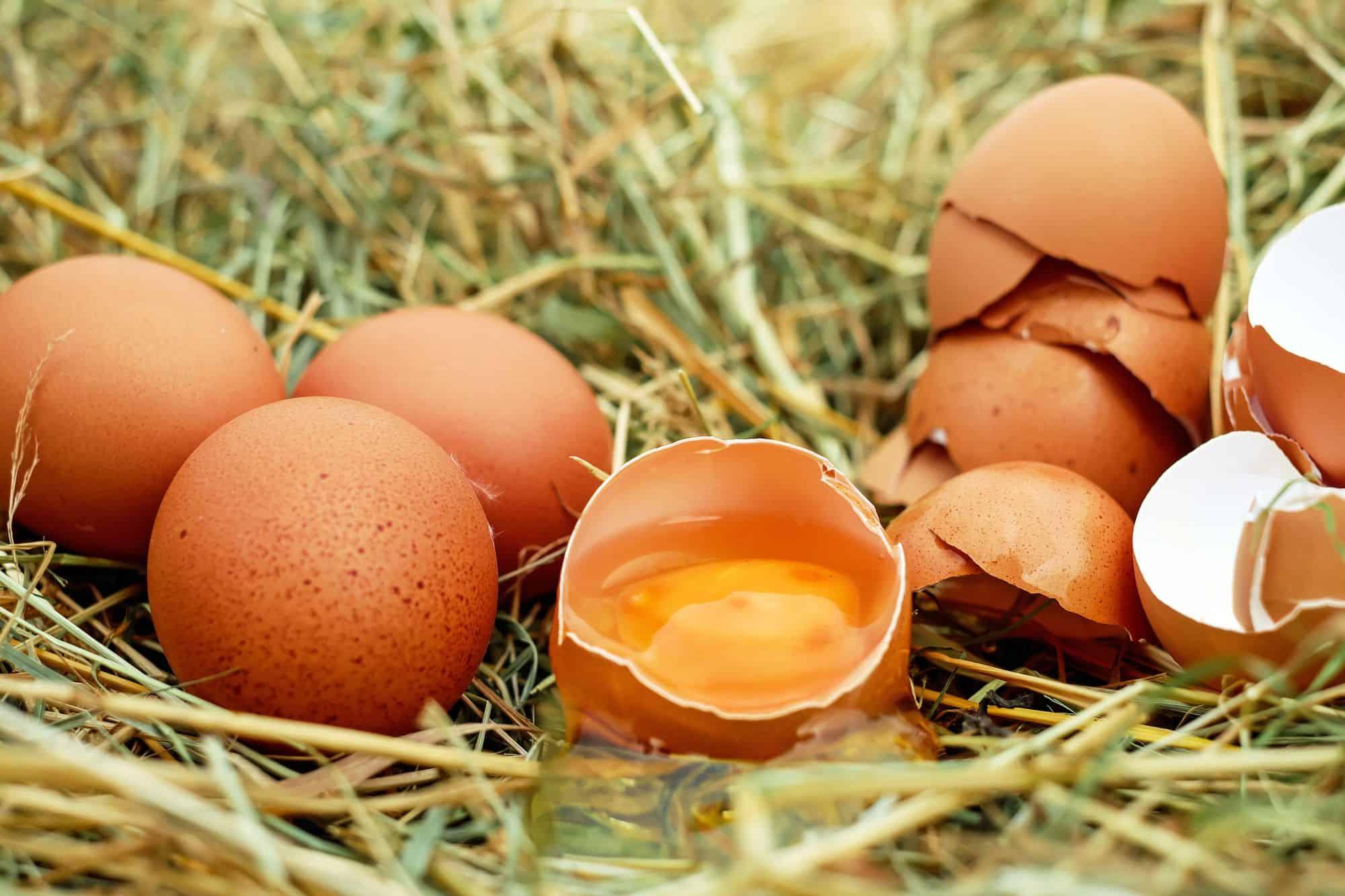 بيضة واحدة كل يوم تساعد الأطفال على زيادة أحجامهم وأطوالهم
