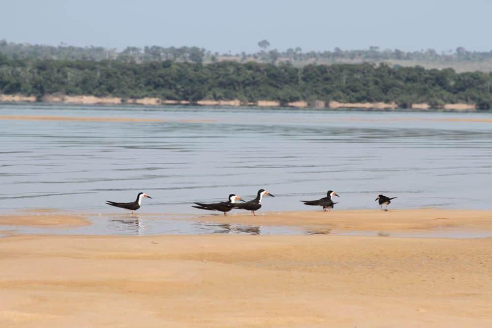 السدود على نهر الأمازون قد يكون لها أثار مدمرة واسعة النظاق، وما زلنا نقوم بإنشاء المزيد منها