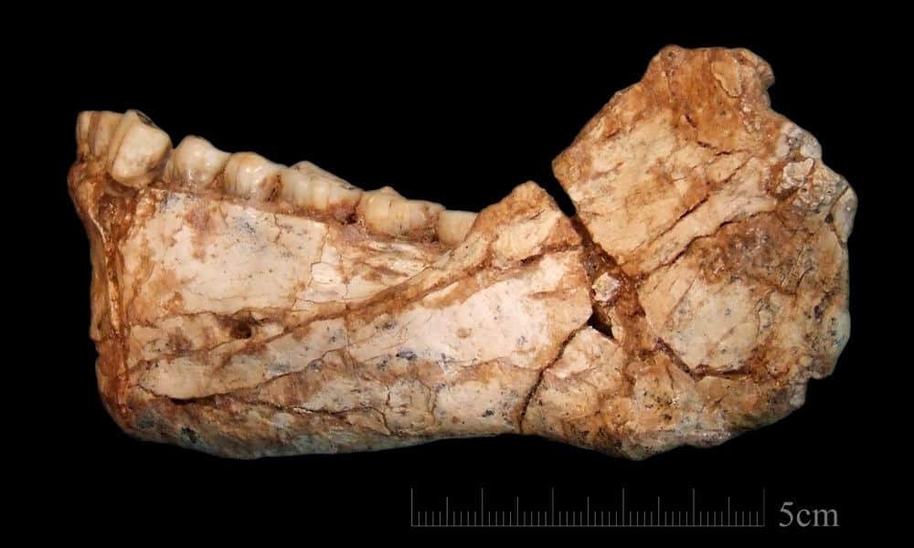 أقدم الأحافير التي تعود للإنسان العاقل تظهر أنه عاش قبل 300 ألف عام