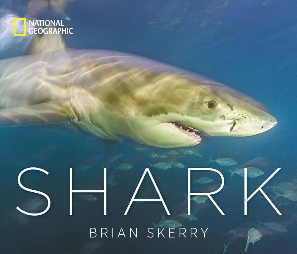 صور قريبة وخاصة لأسماك القرش المذهلة
