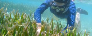 الشعاب المرجانية تُظهر تأثيرالتغير المناخي عليها، لكن لا يزال هناك أمل