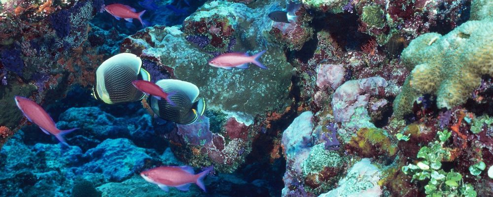 الطحالب الاصطناعية قد تساهم في إنقاذ المحيطات