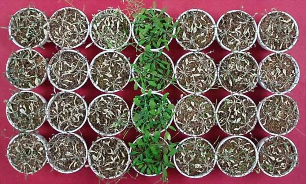 تنمية النباتات في الخل تساهم في إنقاذها من الجفاف