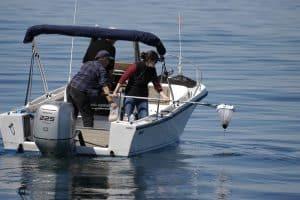 لإنقاذ الحيتان المهددة بالانقراض، لا بدّ من البحث في فضلاتها