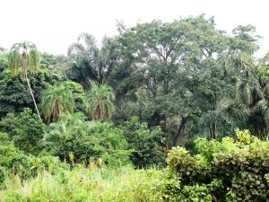 إيقاف إزالة الغابات ربما يكون أسهل مما نظن