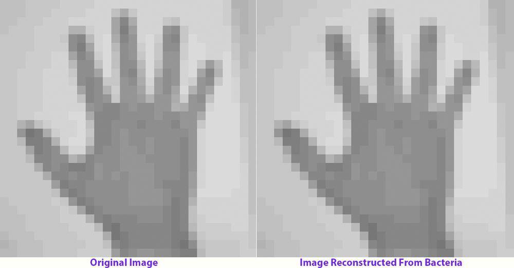 باحثون يستخدمون تقنية كريسبر لتسجيل مقطع فيديو ضمن الحمض النووي