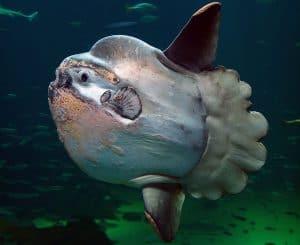 تعرف على هذا النوع الجديد من الأسماك المراوغة والغريبة