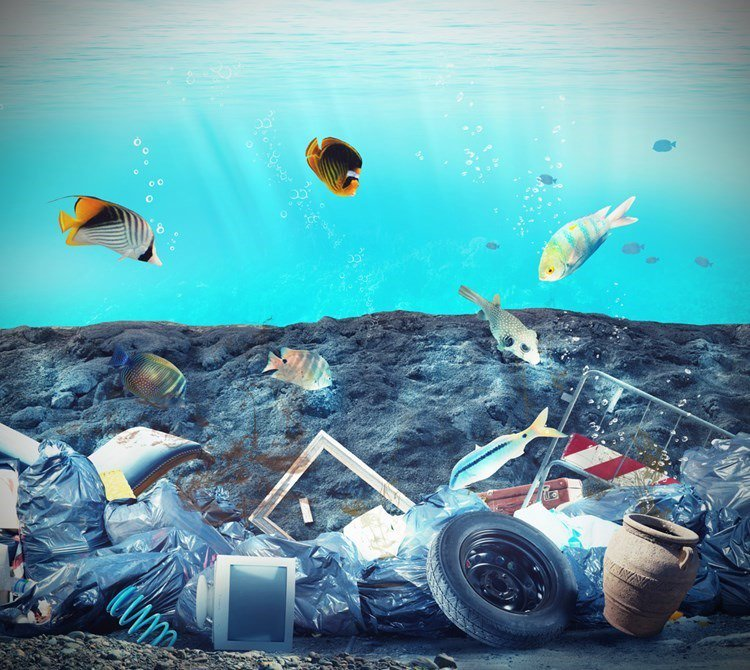 لماذا تأكل الأسماك النفايات البلاستيكية؟