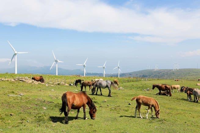 هل يمكن لكل دول العالم الاعتماد على الطاقة المتجددة بشكل كامل؟