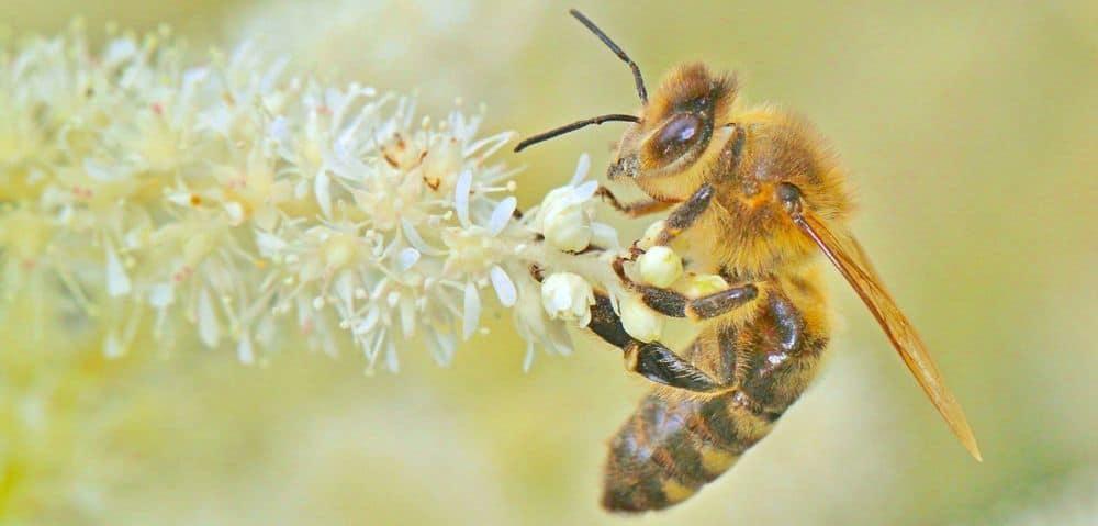 النحل الذي له الفضل في قهوتك الصباحية قد يكون في أزمة كبيرة
