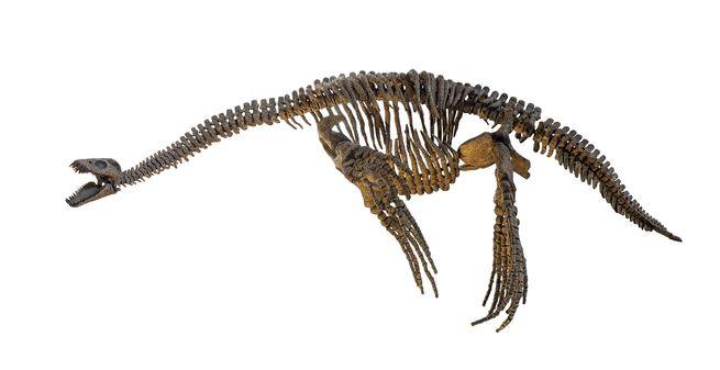 البليزوصورات سادت العالم باستخدام زعانفها الأربع