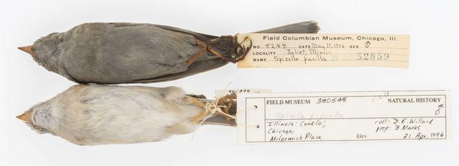 هذه الطيور الملطخة تظهر لنا أهمية متاحف التاريخ الطبيعي