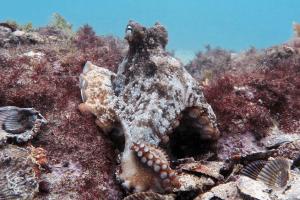 أوكتلانتس: أرض الأخطبوطات السحرية