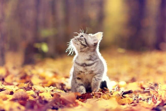 لماذا تأخر فصل الخريف؟