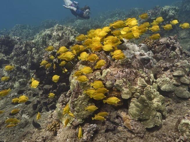 أدوات أساسية يصطحبها الباحثون تحت سطح الماء