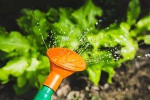 ما هي كمية المياه التي يحتاجها طعامنا لينمو؟