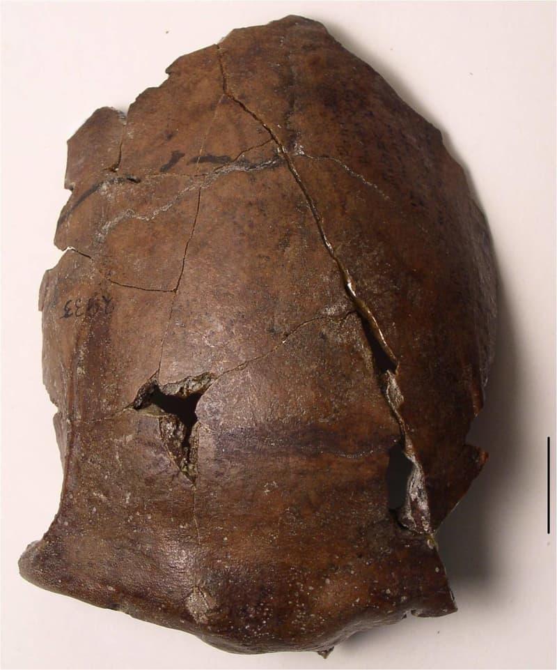 هذه الجمجمة البشرية قد تعود لأحد ضحايا تسونامي قديم