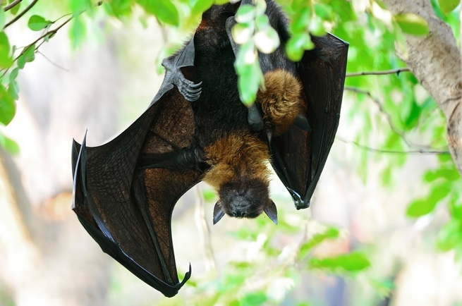 الأدوات التي يستخدمها الباحثون في دراسة الخفافيش