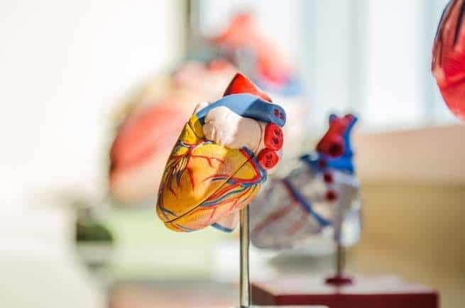 دراسة حديثة: فيروس كورونا هاجم خلايا القلب في المختبر