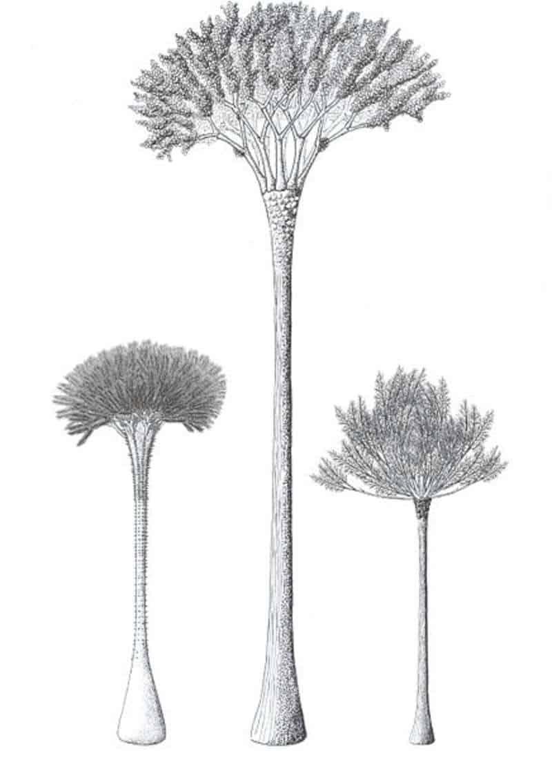 منذ ملايين الأعوام، مزقت بعض الأشجار نفسها لتنمو