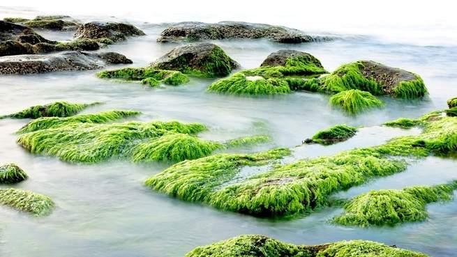 البطلينوس يحمي الأنظمة البيئية الساحلية من التغير المناخي