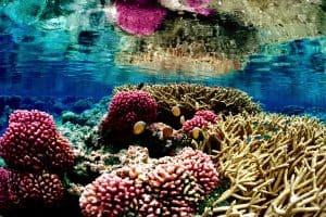 لدى المرجان خطة في طريقة نموه وانتشاره. ما هي؟