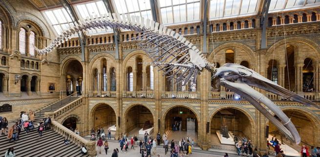 أربعة أساليب يمكن لمتاحف التاريخ الطبيعي أن تحرّف من خلالها الحقيقة