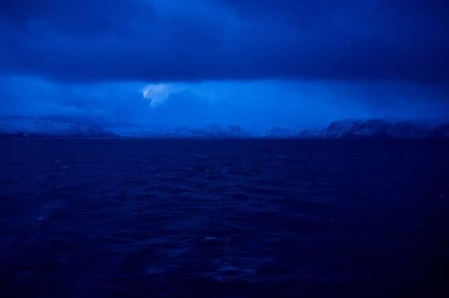 كيف تتكيف الحيوانات القطبية مع الظلام الشديد لعدة أشهر؟