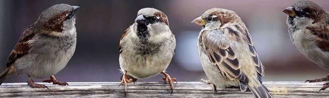 أحجام العصافير آخذة في الانكماش