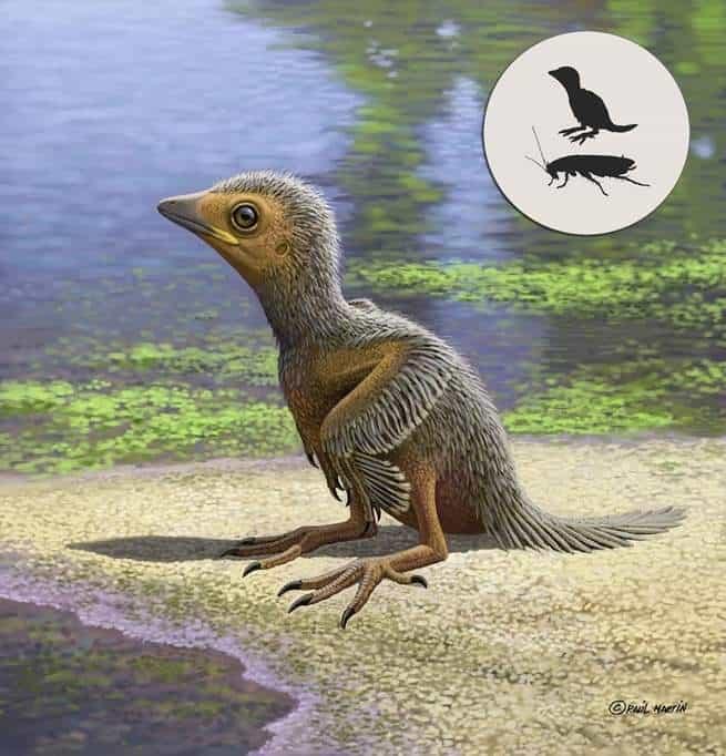 هذا الطائر الصغير عاش قبل 127 مليون سنة، ومات وهو بحجم إصبعك الصغير